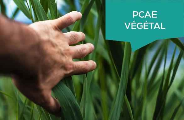 PCAE Végétal : nouvel appel à projet