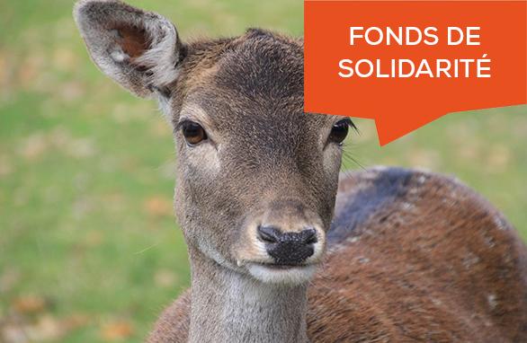 fonds de solidarité gibiers