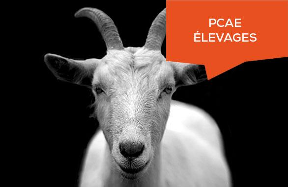 Nouveauté PCAE élevage
