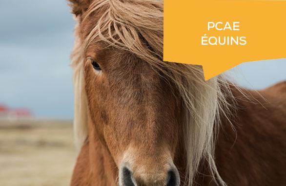 PCAE élevage équin